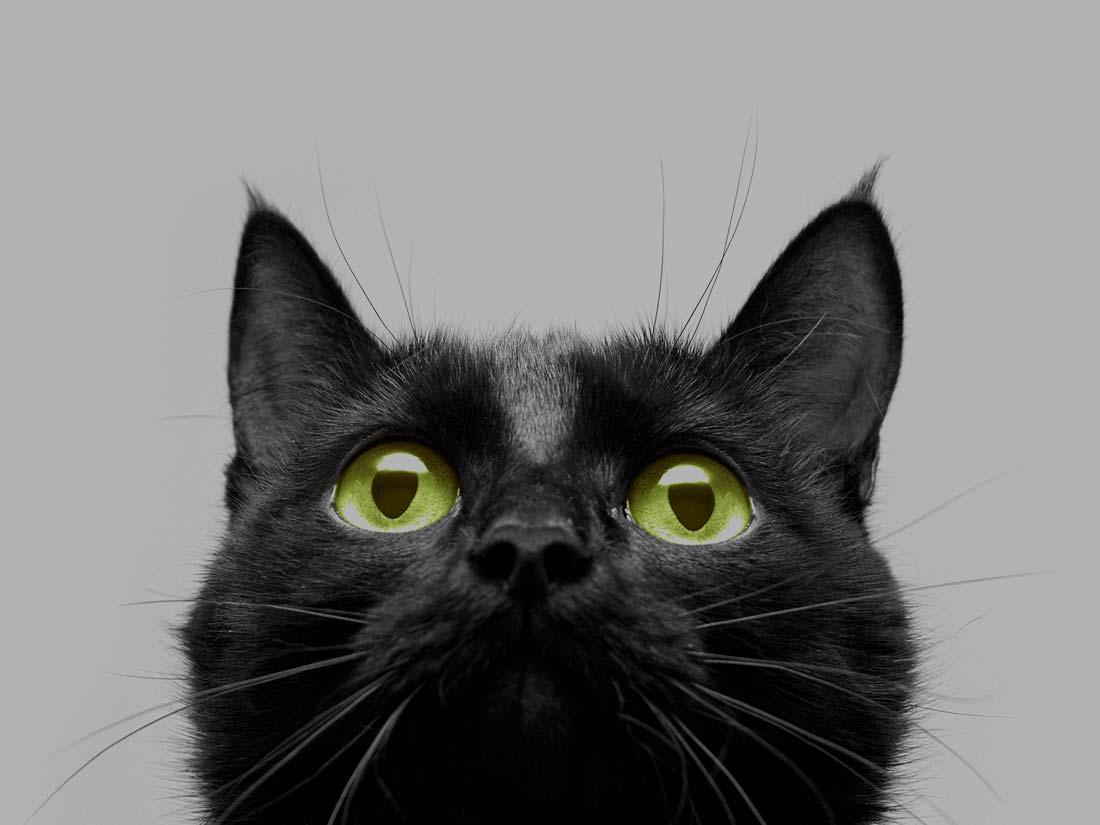 Le leggende sul gatto nero